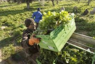 Αγρότες: Παράταση μέχρι 20/2 για δήλωση μεταβολής εργασιών και έκδοση βιβλίων εσόδων-εξόδων. Μέχρι 31/3 δήλωση αποθεμάτων