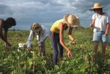 Προγράμματα για τη Νεανική Αγροτική Επιχειρηματικότητα