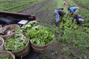 τέλος επιτηδεύματος των αγροτών