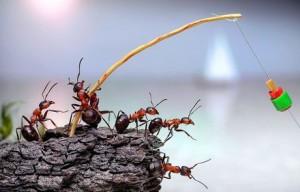 φιλοσοφία του μυρμηγκιού