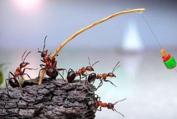 Η φιλοσοφία του μυρμηγκιού