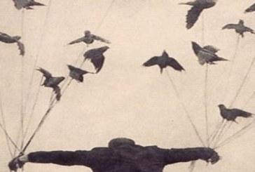 Τα Φτερά Είναι για να Πετάς