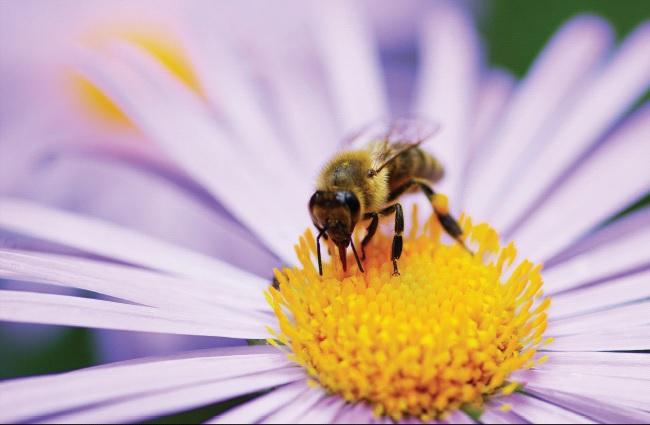Ημερίδα με θέμα: Μέλισσα & Περιβάλλον, Μελισσοκομία & Δασικά Οικοσυστήματα