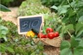 Μέτρο 11 Βιολογικές καλλιέργειες