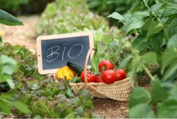 Επιπλέον 3 εκατομμύρια ευρώ στη βιολογική γεωργία με απόφαση του ΥπΑΑΤ, Μ. Βορίδη