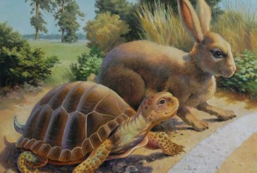 The Tortoise and the Hare: The Investing – Trading Myth