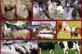 Καθορίστηκε το ύψος της συνδεδεμένης ενίσχυσης για τα ειδικά δικαιώματα των κτηνοτρόφων