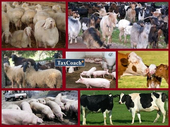 Φωτεινή Αραμπατζή: Στόχος μας η στήριξη του εισοδήματος των Ελλήνων κτηνοτρόφων