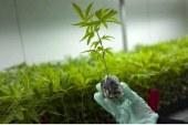 Κοινή Συνέντευξη Τύπου για το Σχέδιο Νόμου «Διατάξεις για την Παραγωγή Τελικών Προϊόντων Φαρμακευτικής Κάνναβης»