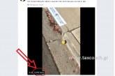 Η ανθρώπινη ανοησία δεν έχει όρια… εκατομμύρια είδαν ένα βίντεο ενός λεμονιού που κύλαγε στον δρόμο