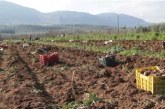 Πρωθυπουργικό Γραφείο: Στηρίζουμε έμπρακτα τον αγροτικό κόσμο