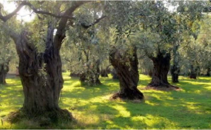 Άμεση λύση στα προβλήματα των ελαιοπαραγωγών της Κρήτης